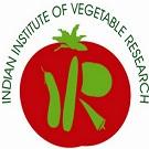 IIVR Logo